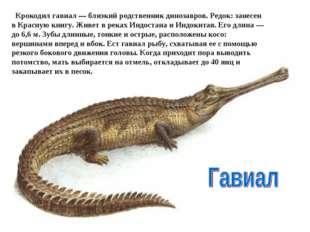 Крокодил гавиал — близкий родственник динозавров. Редок: занесен в Красную