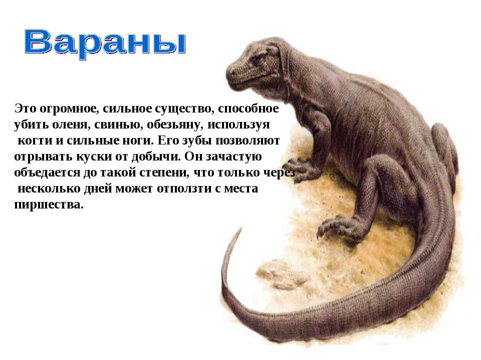 Это огромное, сильное существо, способное убить оленя, свинью, обезьяну, испо...