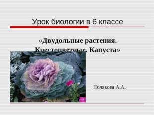 Урок биологии в 6 классе «Двудольные растения. Крестоцветные. Капуста» Поляк