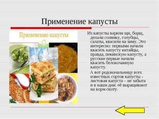 Применение капусты Из капусты варили щи, борщ, делали солянку, голубцы, салат