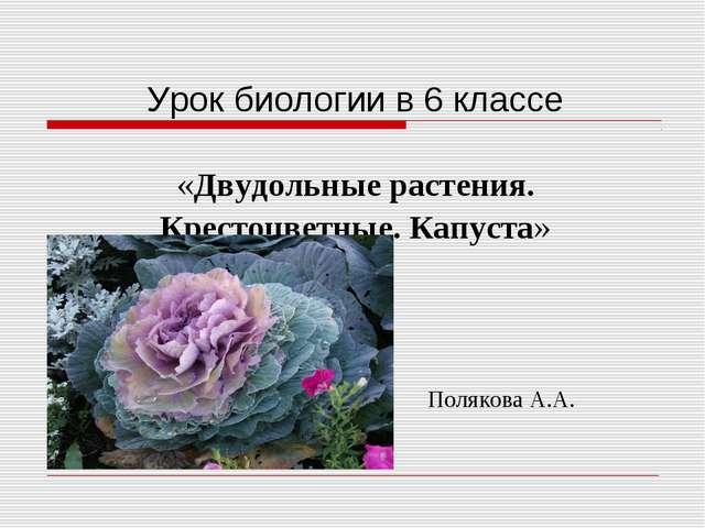 Урок биологии в 6 классе «Двудольные растения. Крестоцветные. Капуста» Поляк...