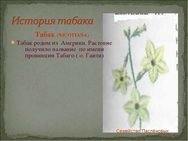 Табак (NICOTIANA) Табак родом из Америки. Растение получило название по имен...
