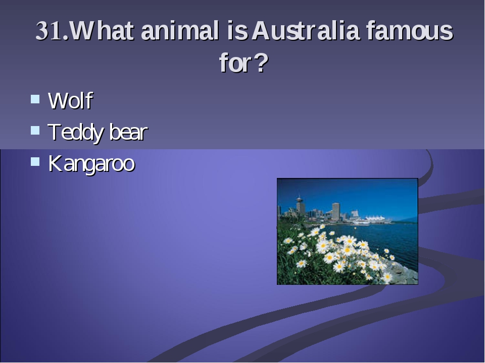 31.What animal is Australia famous for? Wolf Teddy bear Kangaroo