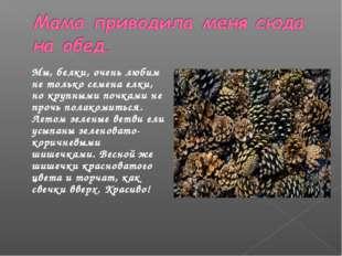 Мы, белки, очень любим не только семена елки, но крупными почками не прочь по