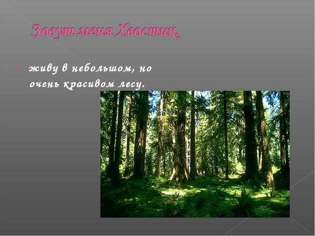 живу в небольшом, но очень красивом лесу.