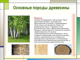 Основные породы древесины
