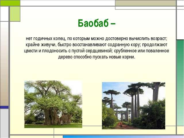 Баобаб – нетгодичных колец, по которым можно достоверно вычислить возраст; к...