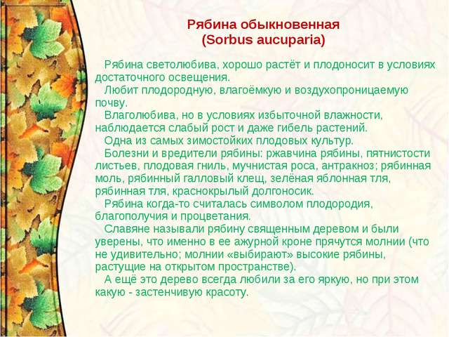 Рябина обыкновенная (Sorbus aucuparia) Рябина светолюбива, хорошо растёт и пл...