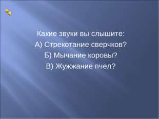 Какие звуки вы слышите: А) Стрекотание сверчков? Б) Мычание коровы? В) Жужжан