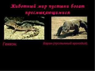 Животный мир пустыни богат пресмыкающимися Геккон. Длина тела до 30 см. Актив