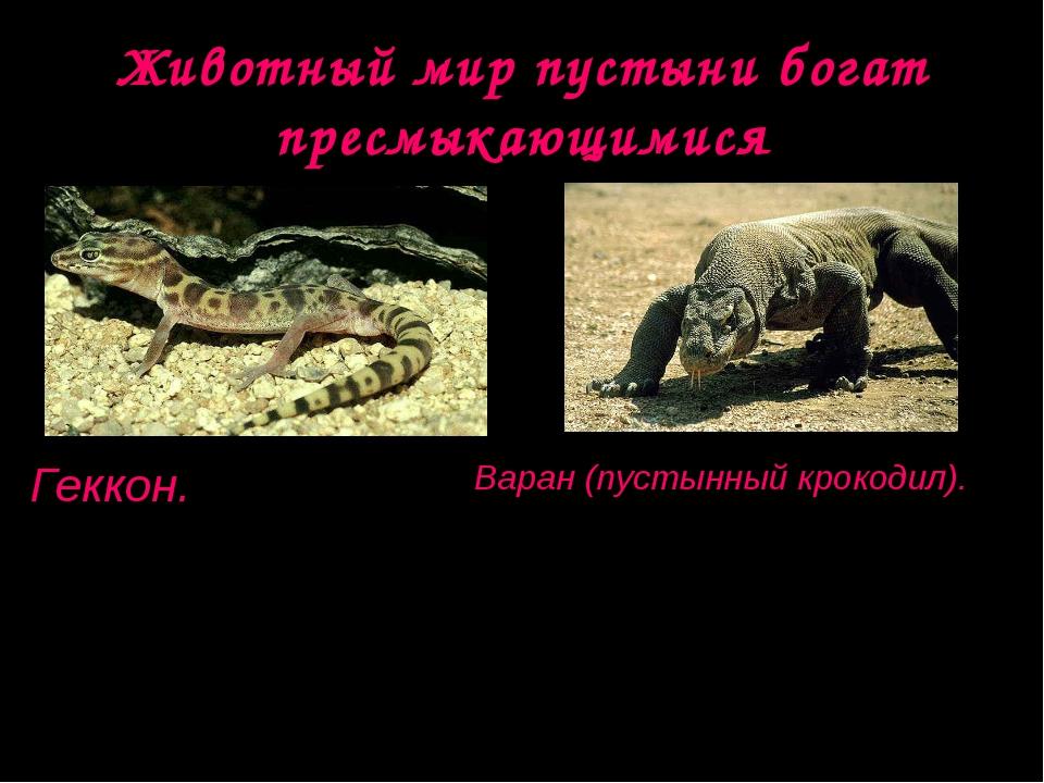 Животный мир пустыни богат пресмыкающимися Геккон. Длина тела до 30 см. Актив...