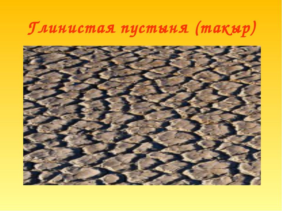 Глинистая пустыня (такыр)