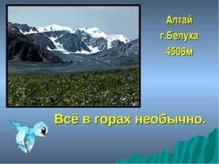 Всё в горах необычно. Алтай г.Белуха 4506м