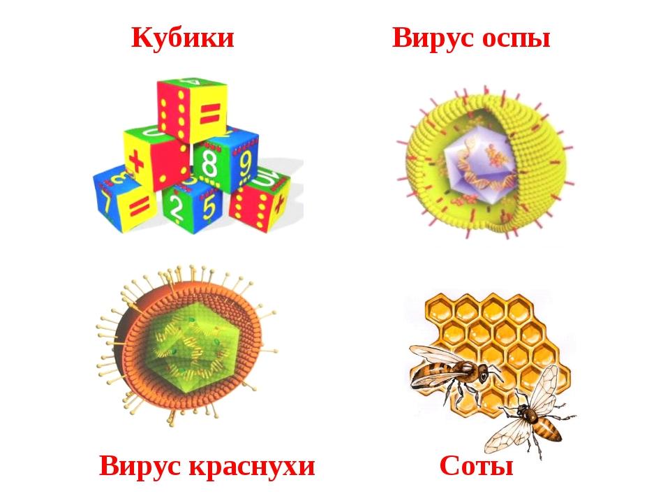 Вирус оспы Вирус краснухи Соты Кубики