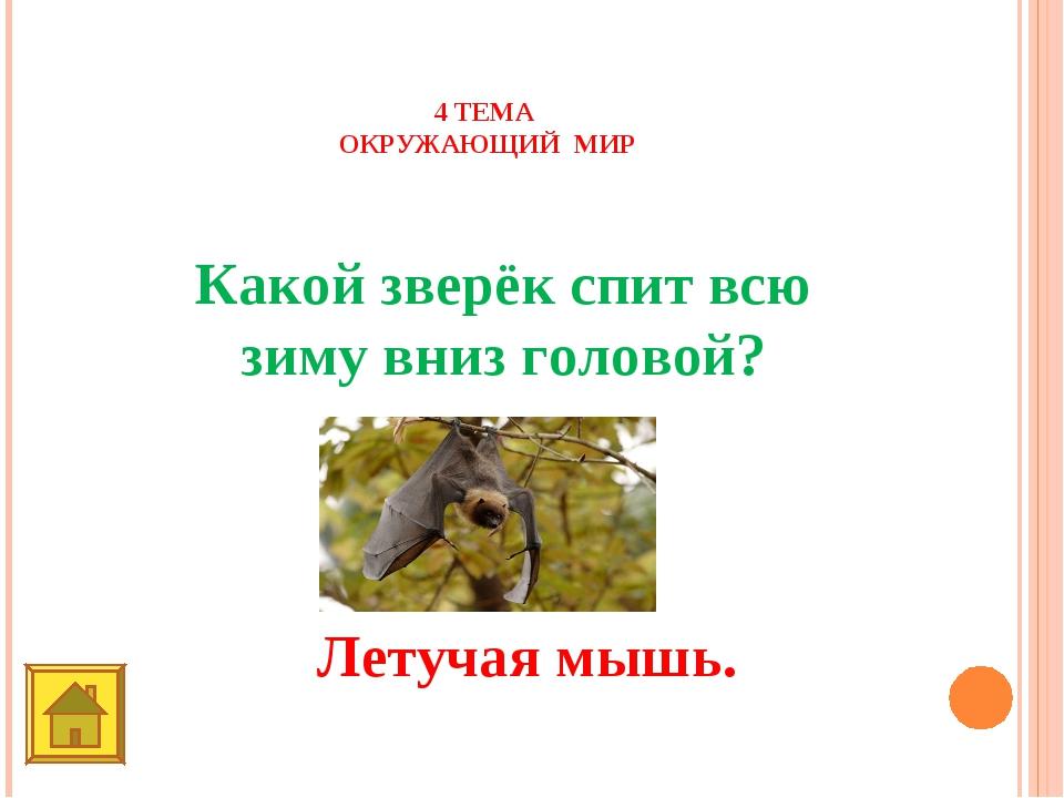 4 ТЕМА ОКРУЖАЮЩИЙ МИР 40 баллов Какой зверёк спит всю зиму вниз головой? Лету...