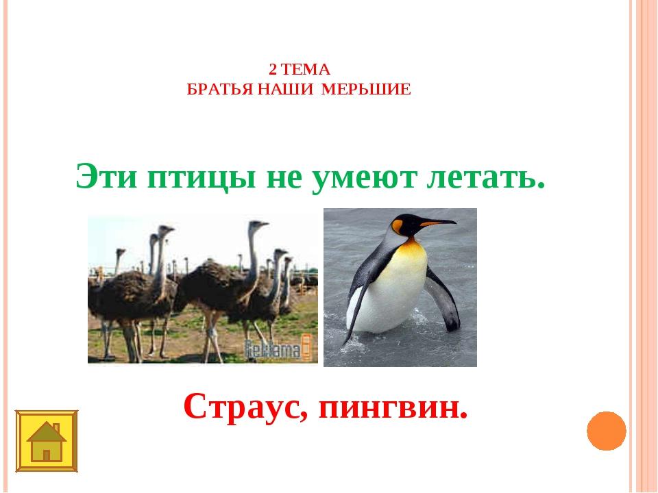 2 ТЕМА БРАТЬЯ НАШИ МЕРЬШИЕ 10 баллов Эти птицы не умеют летать. Страус, пингв...