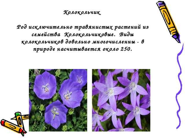 Колокольчик Род исключительно травянистых растений из семейства Колокольчиков...