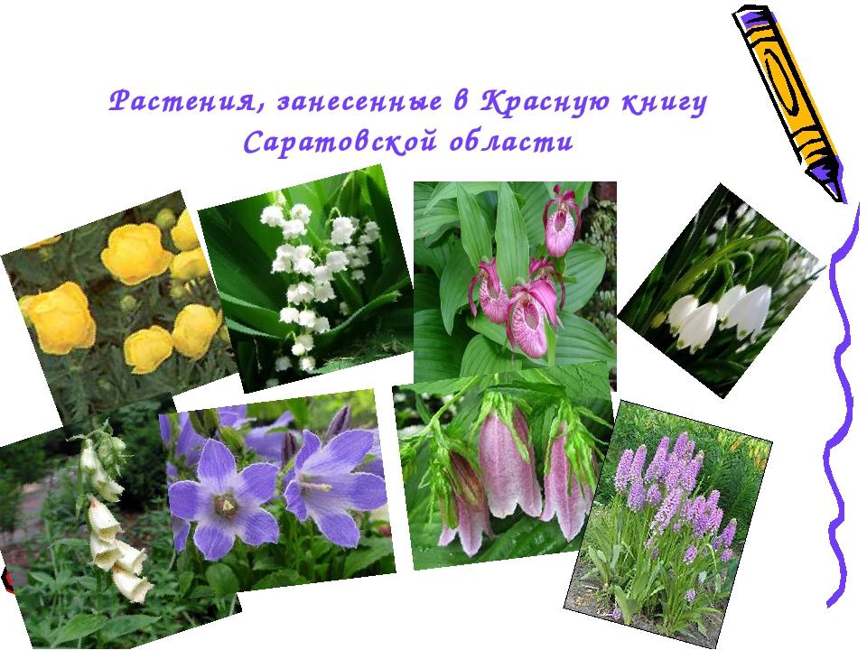 фото цветковых растений саратовской области очень благодарны фотографии