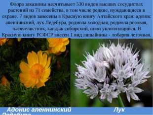 . Флора заказника насчитывает 530 видов высших сосудистых растений из 71 семе
