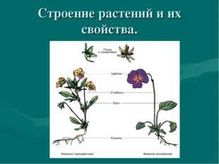 Строение растений и их свойства.