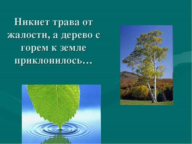 Никнет трава от жалости, а дерево с горем к земле приклонилось…