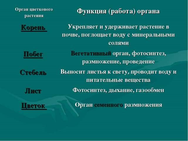 Орган цветкового растенияФункция (работа) органа Корень Укрепляет и удержив...