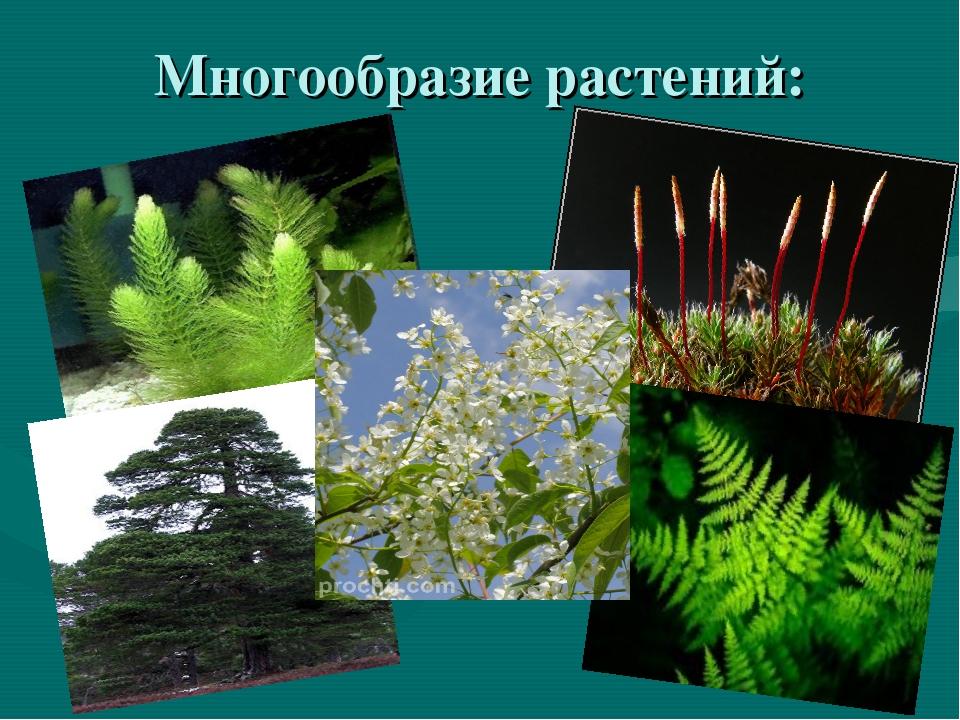 Многообразие растений: