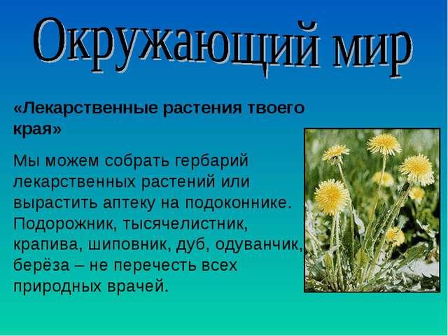 «Лекарственные растения твоего края» Мы можем собрать гербарий лекарственных...
