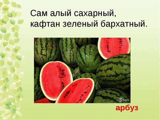 Сам алый сахарный, кафтан зеленый бархатный. арбуз