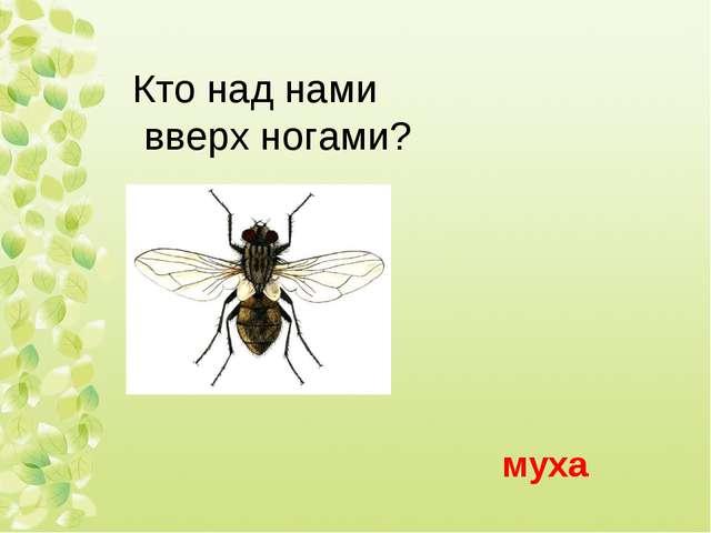 муха Кто над нами вверх ногами? Кто над нами вверх ногами?