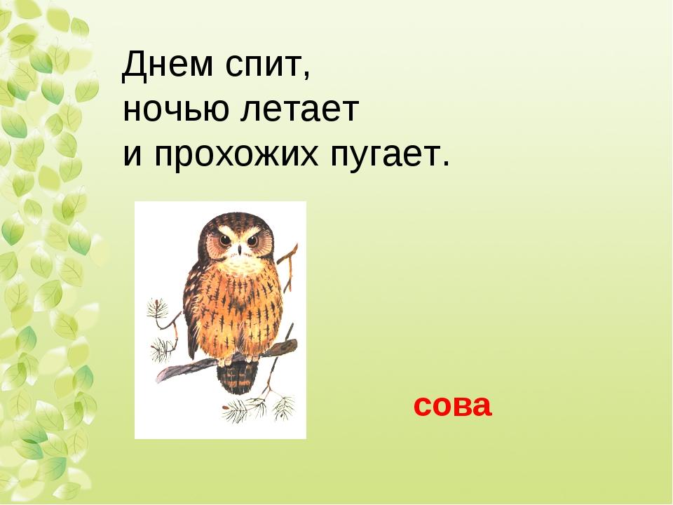 Днем спит, ночью летает и прохожих пугает. сова