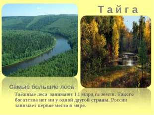 Т а й г а Самые большие леса Таёжные леса занимают 1,1 млрд га земли. Такого