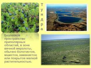 Тундра Безлесное пространство приполярных областей, в зоне вечной мерзлоты, о