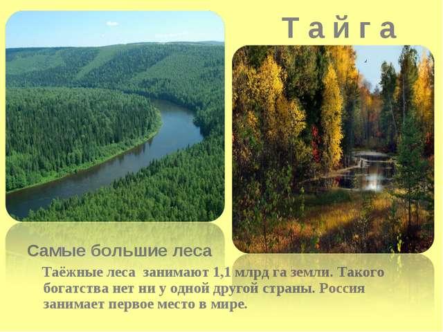 Т а й г а Самые большие леса Таёжные леса занимают 1,1 млрд га земли. Такого...