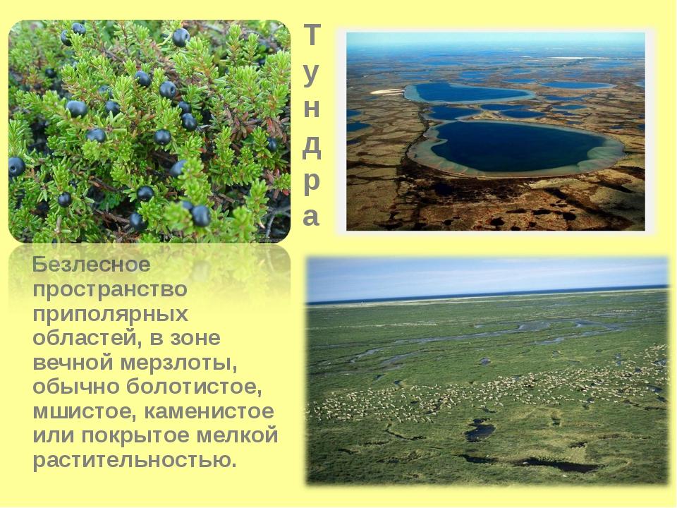 Тундра Безлесное пространство приполярных областей, в зоне вечной мерзлоты, о...