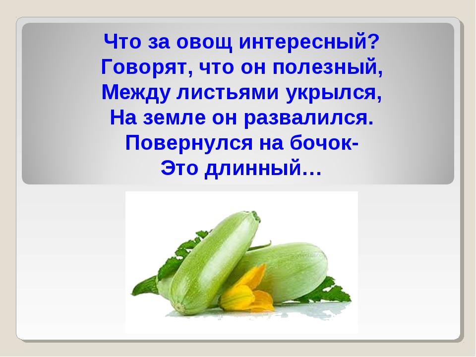 Что за овощ интересный? Говорят, что он полезный, Между листьями укрылся, На...