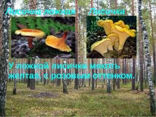 Лисичка ложная Лисичка У ложной лисички мякоть желтая, с розовым оттенком.