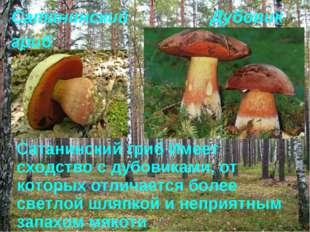 Дубовик Сатанинский гриб Имеет сходство с дубовиками, от которых отличается б
