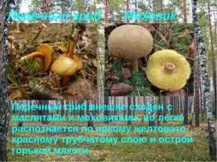 Перечный гриб Моховик Перечный гриб внешне сходен с маслятами и моховиками, н