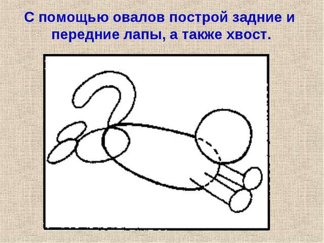 С помощью овалов построй задние и передние лапы, а также хвост.