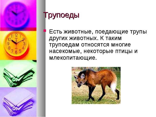 Трупоеды Есть животные, поедающие трупы других животных. К таким трупоедам от...