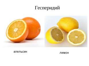 апельсин лимон Гесперидий