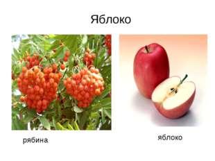рябина яблоко Яблоко