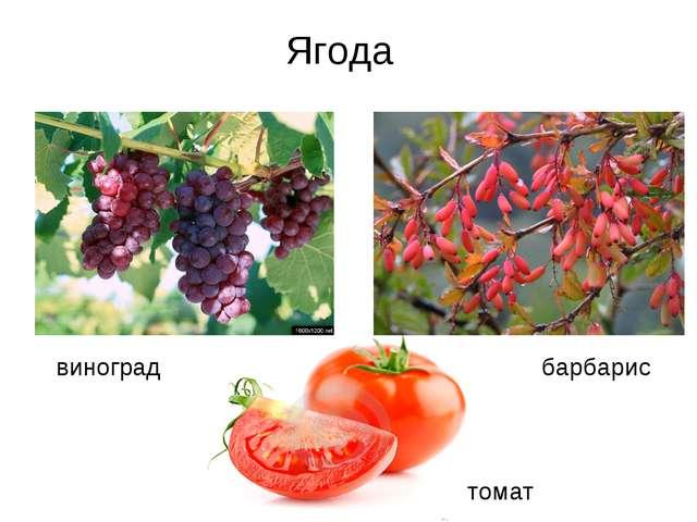 виноград барбарис томат Ягода