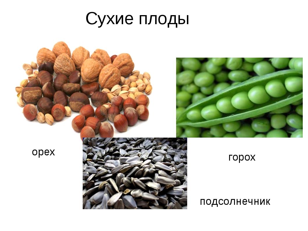 подсолнечник орех горох Сухие плоды