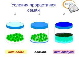 Условия прорастания семян сухо влажно много воды 1 2 3 нет воздуха нет воды