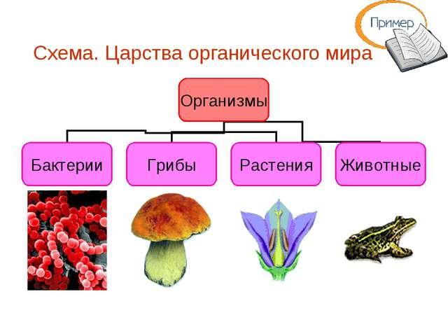 Схема. Царства органического мира
