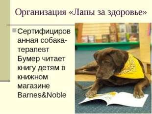 Организация «Лапы за здоровье» Сертифицированная собака-терапевт Бумер читает