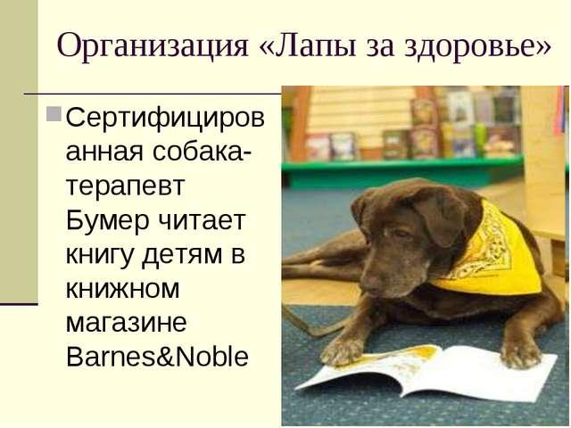 Организация «Лапы за здоровье» Сертифицированная собака-терапевт Бумер читает...
