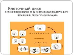 Клеточный цикл период жизни клетки от ее появления до последующего деления ил